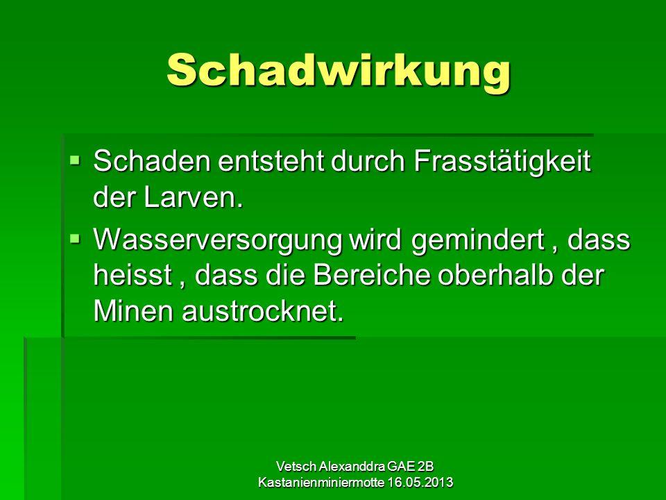 Vetsch Alexanddra GAE 2B Kastanienminiermotte 16.05.2013