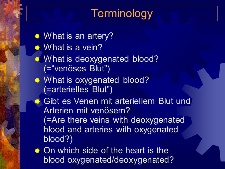 Terminology What is an artery What is a vein
