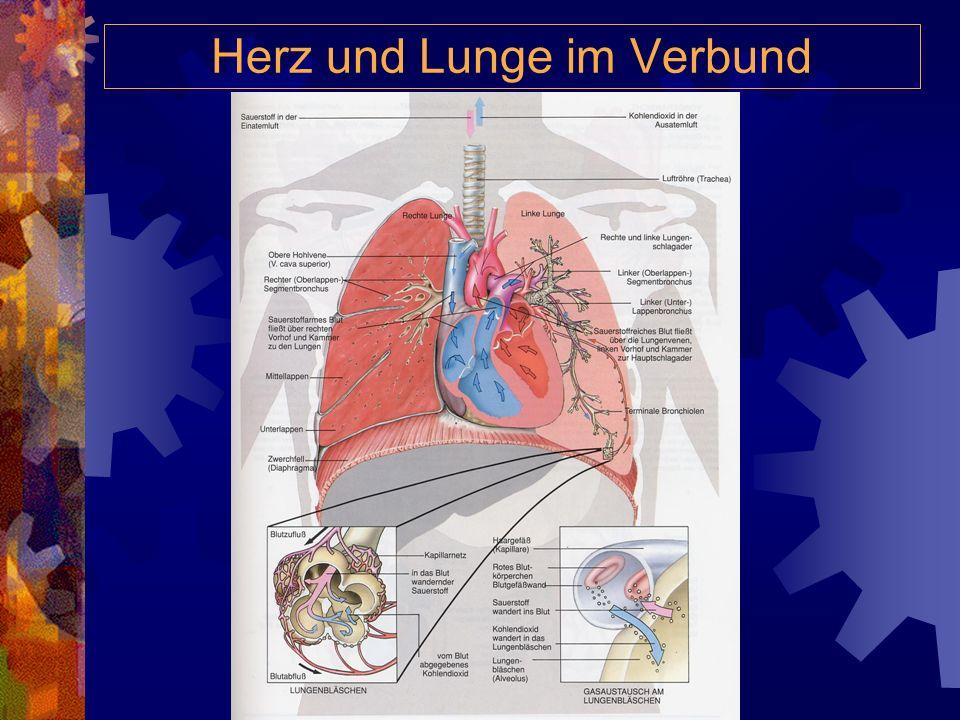 Herz und Lunge im Verbund
