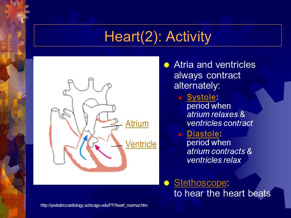 Heart(2): Activity Atria and ventricles always contract alternately: