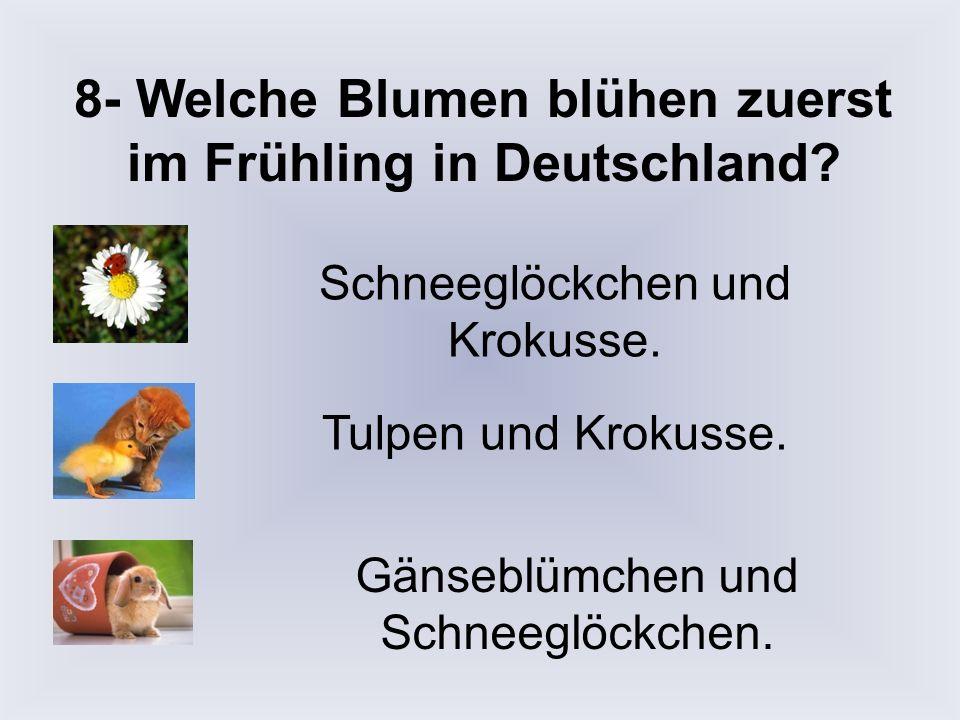 8- Welche Blumen blühen zuerst im Frühling in Deutschland