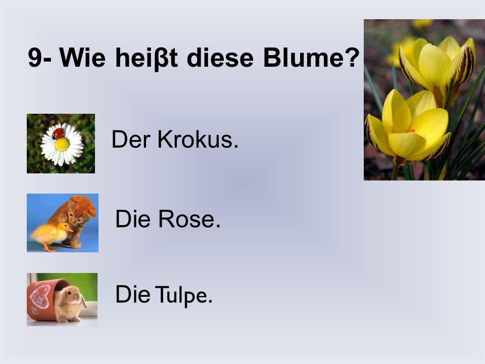 9- Wie heiβt diese Blume Der Krokus. Die Rose. Die Tulpe.