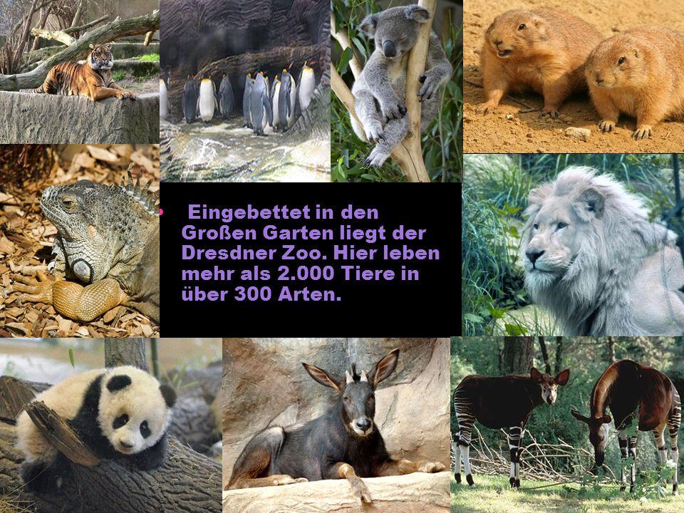 Eingebettet in den Großen Garten liegt der Dresdner Zoo