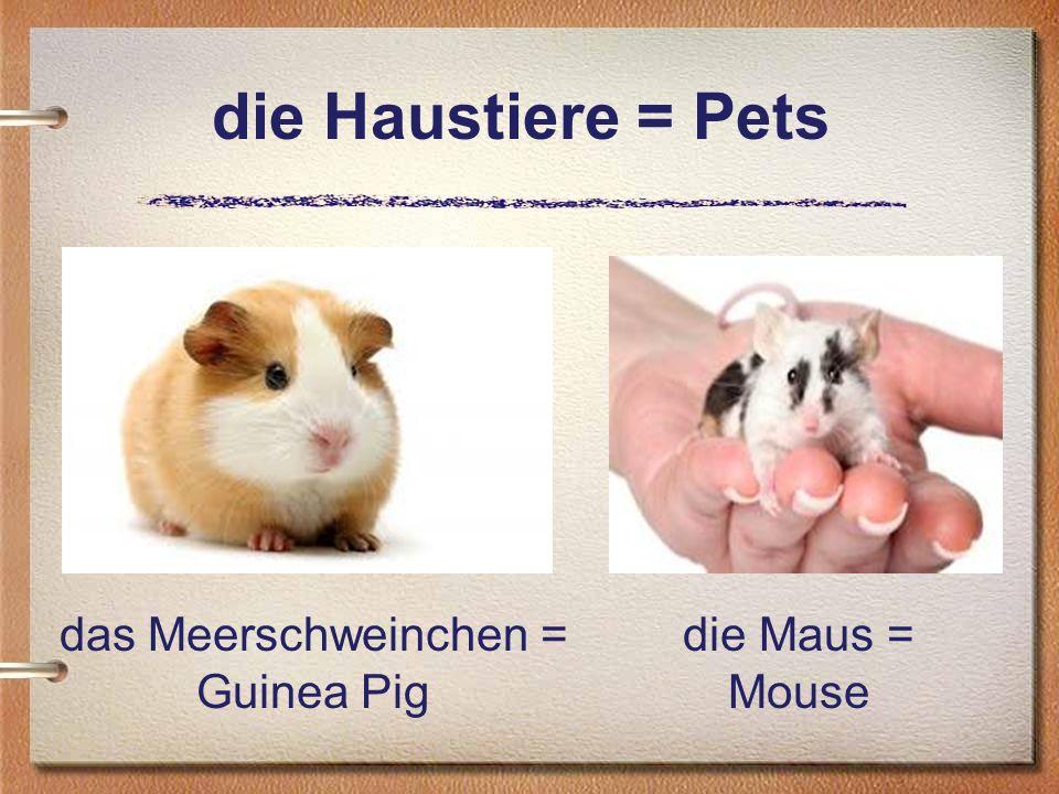 die Haustiere = Pets das Meerschweinchen = Guinea Pig die Maus = Mouse