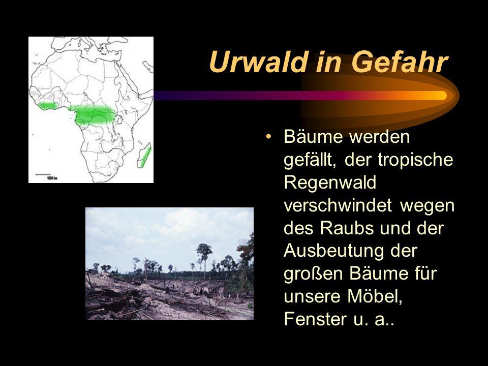 Urwald in Gefahr