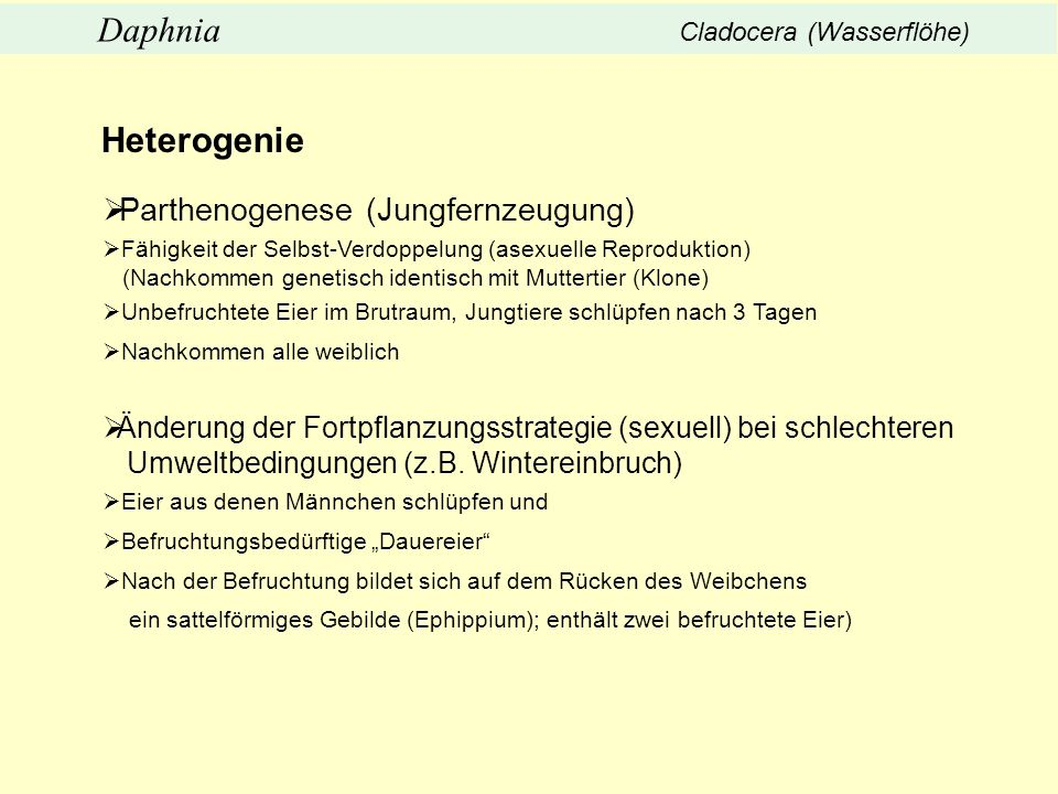 Heterogenie Parthenogenese (Jungfernzeugung)