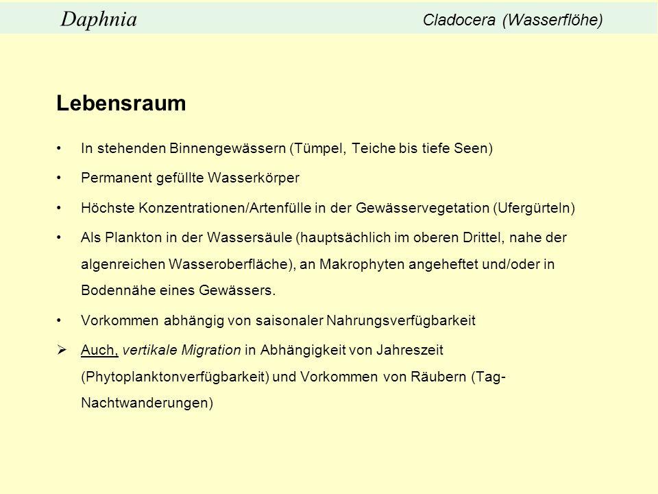 Lebensraum Daphnia Cladocera (Wasserflöhe)