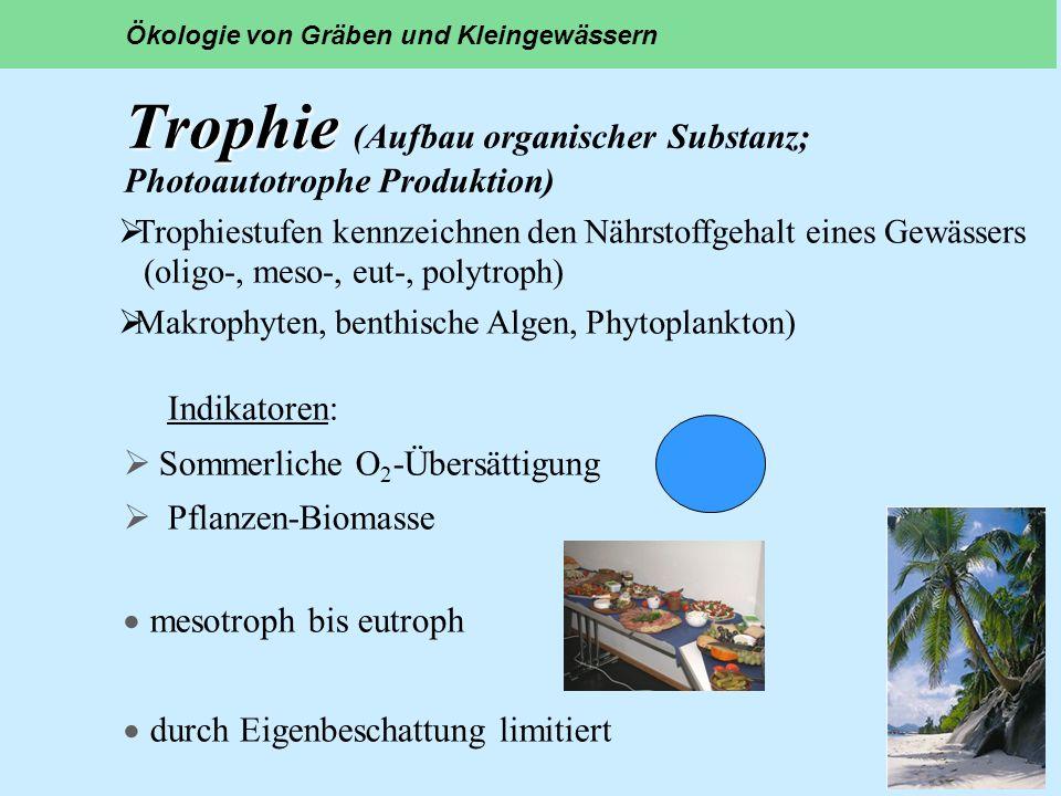 Trophie (Aufbau organischer Substanz; Photoautotrophe Produktion)