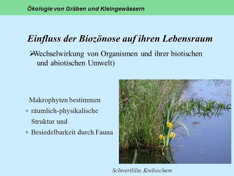 Einfluss der Biozönose auf ihren Lebensraum