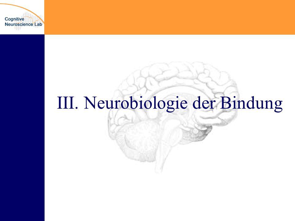 III. Neurobiologie der Bindung