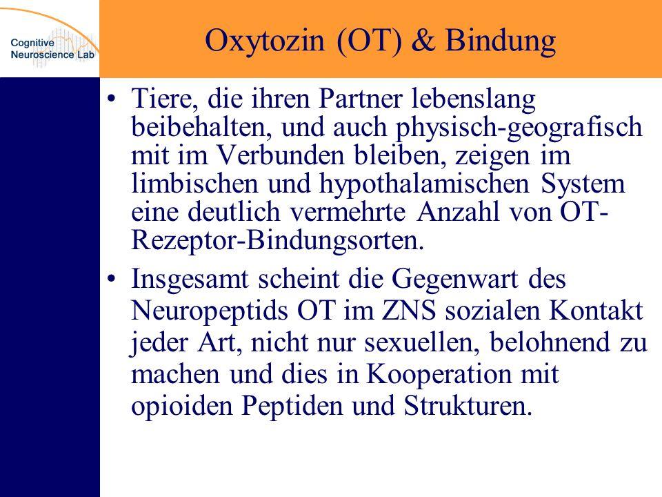 Oxytozin (OT) & Bindung