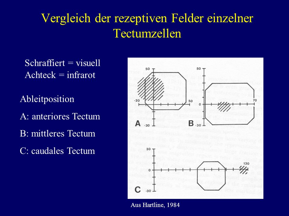 Vergleich der rezeptiven Felder einzelner Tectumzellen