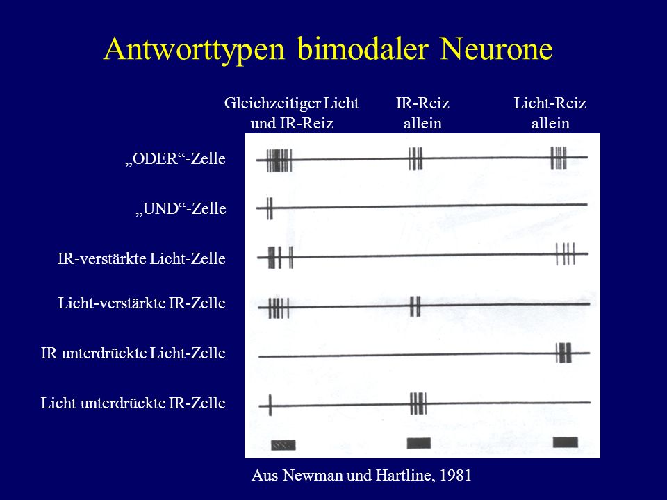 Antworttypen bimodaler Neurone