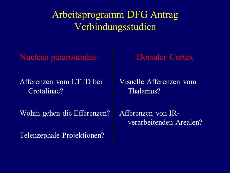 Arbeitsprogramm DFG Antrag Verbindungsstudien