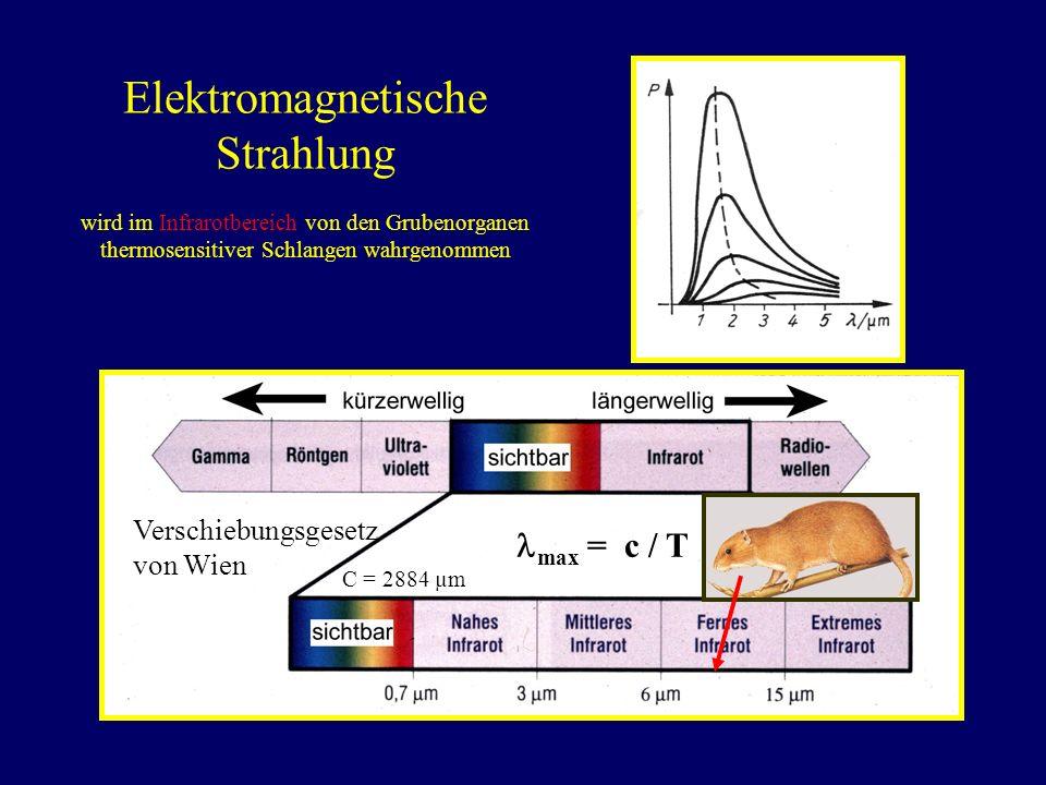 Elektromagnetische Strahlung wird im Infrarotbereich von den Grubenorganen thermosensitiver Schlangen wahrgenommen