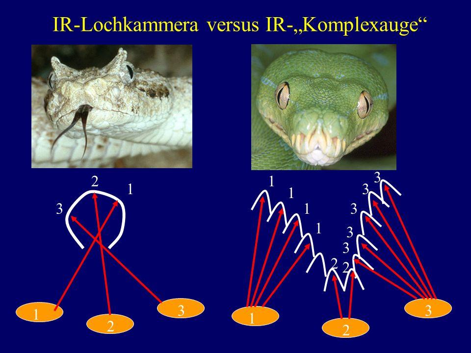 """IR-Lochkammera versus IR-""""Komplexauge"""
