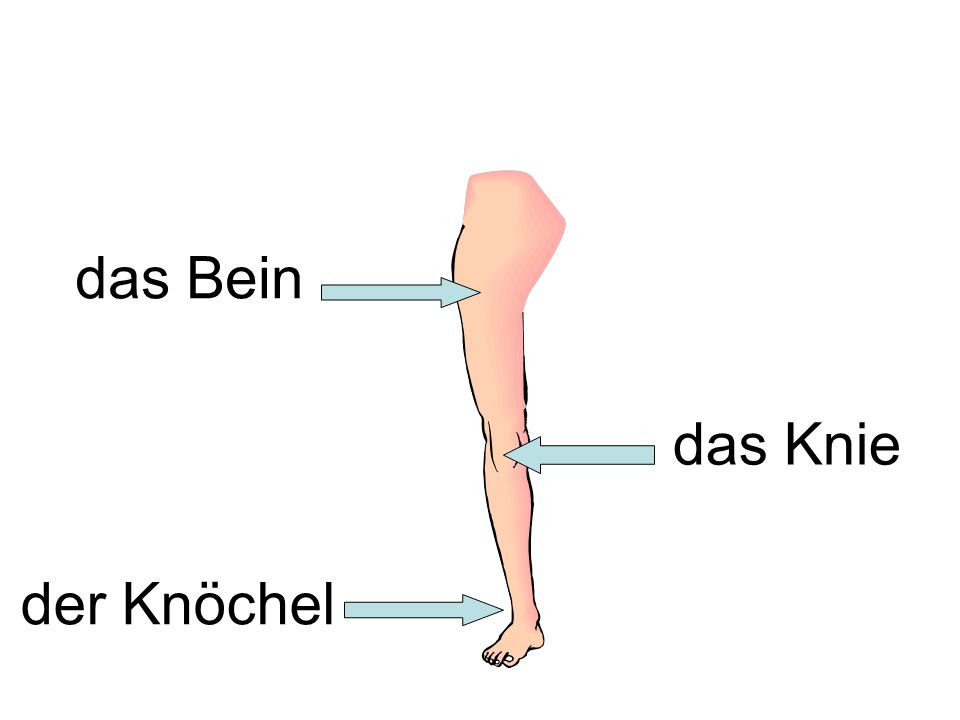 das Bein das Knie der Knöchel