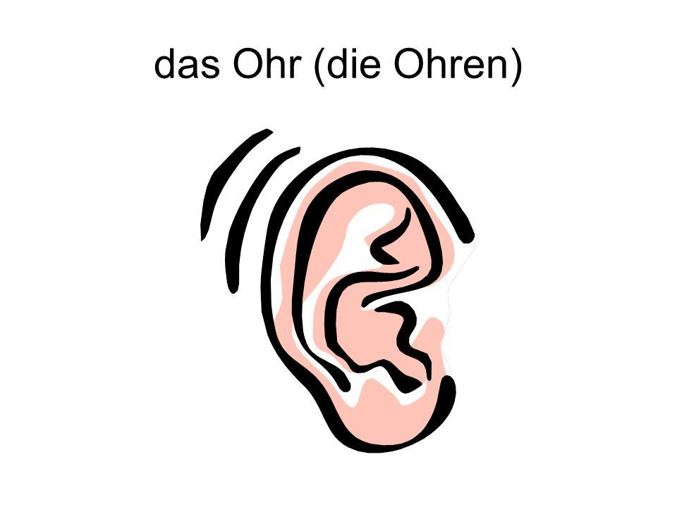 das Ohr (die Ohren)