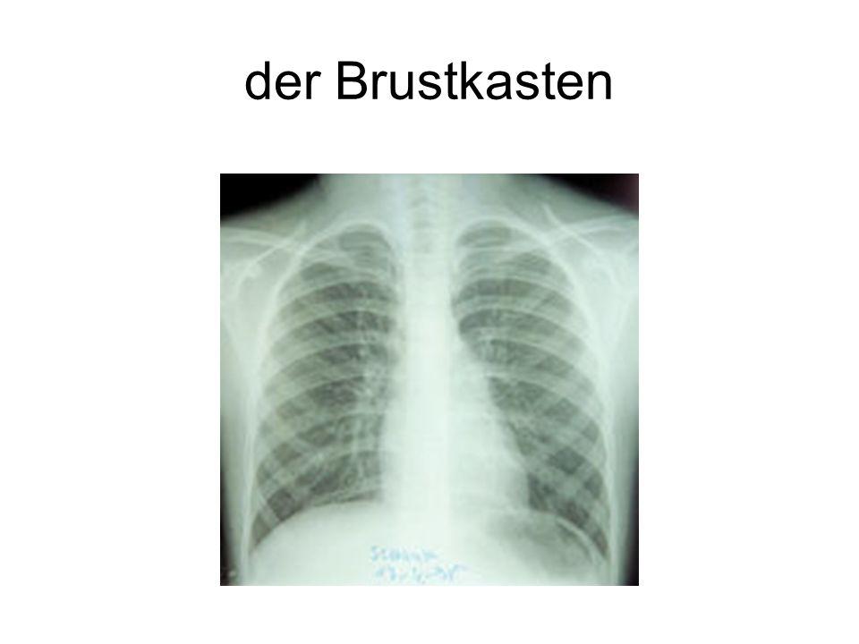 der Brustkasten