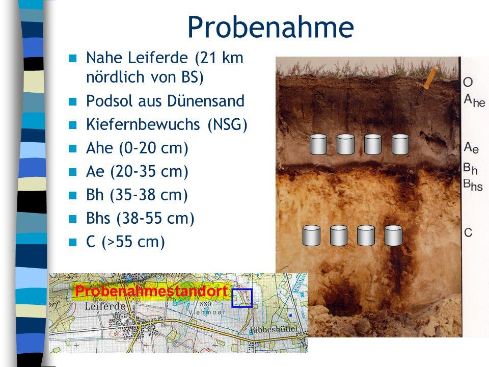 Probenahme Nahe Leiferde (21 km nördlich von BS) Podsol aus Dünensand