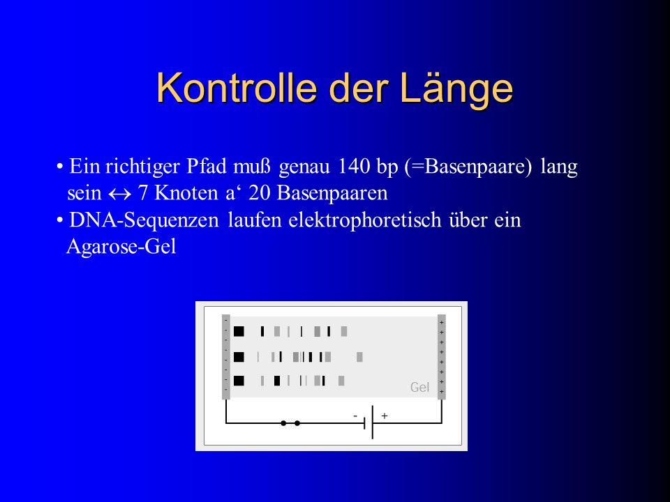 Kontrolle der Länge Ein richtiger Pfad muß genau 140 bp (=Basenpaare) lang sein  7 Knoten a' 20 Basenpaaren.