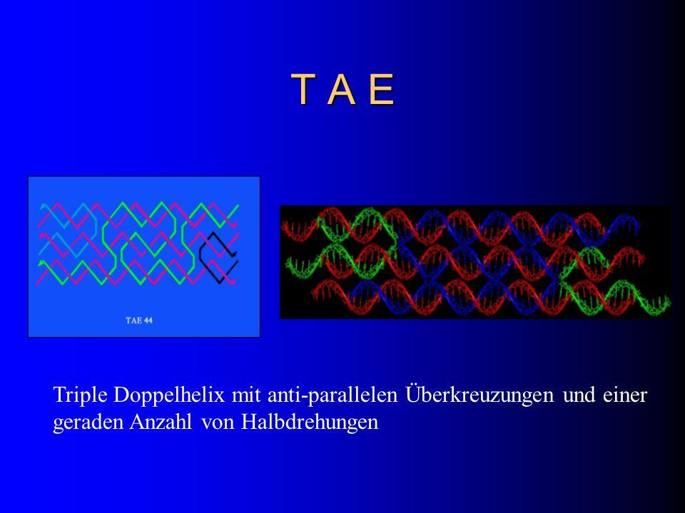 T A E Triple Doppelhelix mit anti-parallelen Überkreuzungen und einer geraden Anzahl von Halbdrehungen.