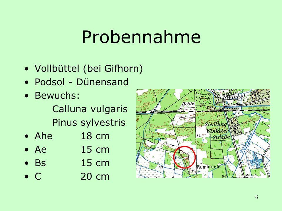 Probennahme Vollbüttel (bei Gifhorn) Podsol - Dünensand Bewuchs: