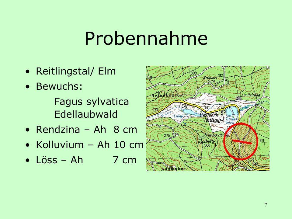 Probennahme Reitlingstal/ Elm Bewuchs: Fagus sylvatica Edellaubwald
