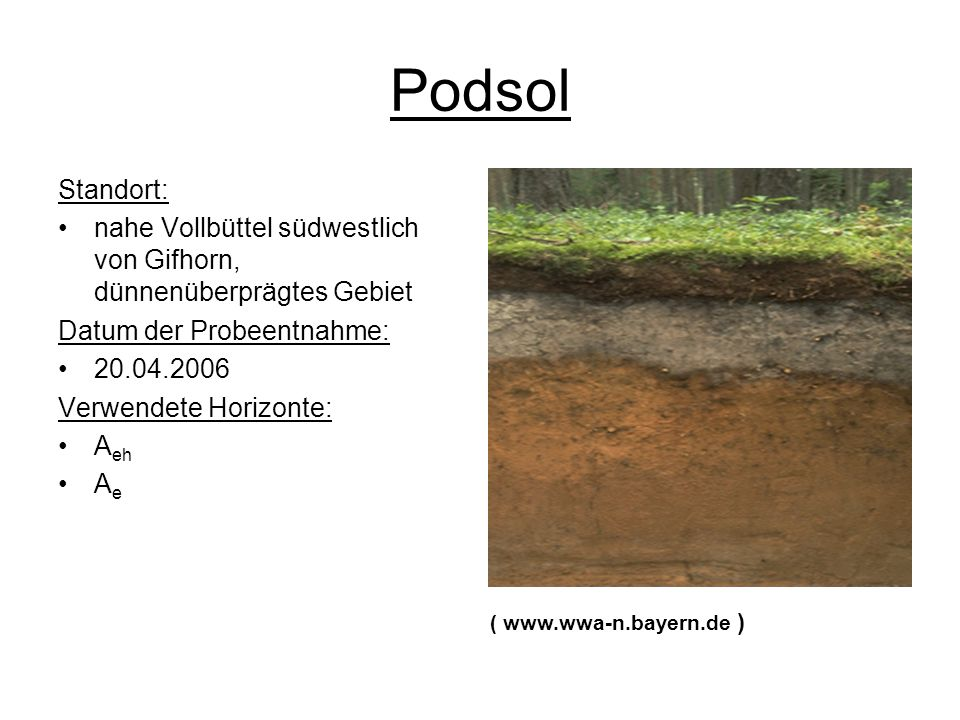 Podsol Standort: nahe Vollbüttel südwestlich von Gifhorn, dünnenüberprägtes Gebiet. Datum der Probeentnahme:
