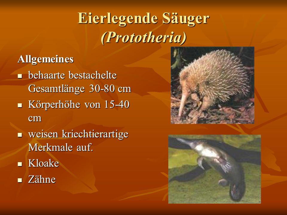 Eierlegende Säuger (Prototheria)