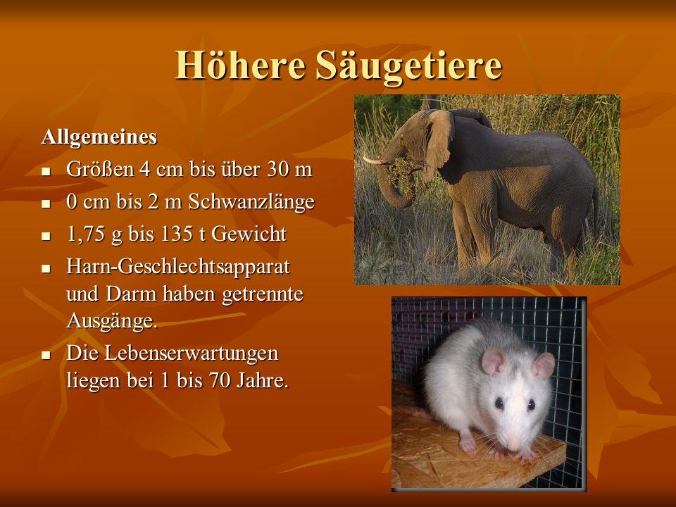 Höhere Säugetiere Allgemeines Größen 4 cm bis über 30 m
