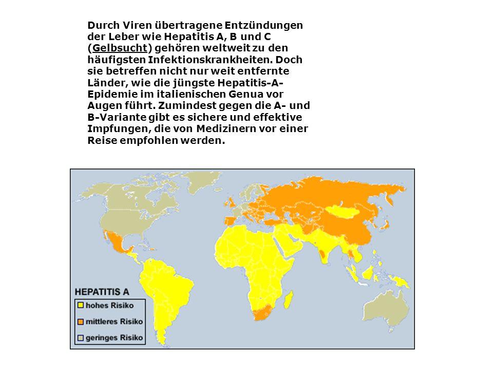Durch Viren übertragene Entzündungen der Leber wie Hepatitis A, B und C (Gelbsucht) gehören weltweit zu den häufigsten Infektionskrankheiten.