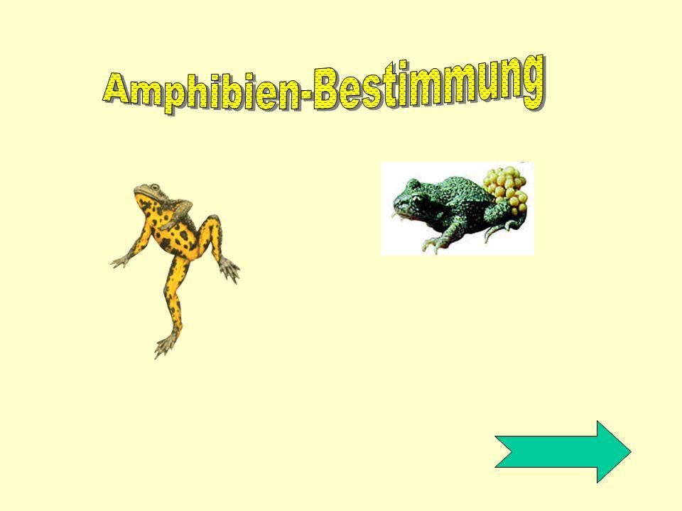 Amphibien-Bestimmung