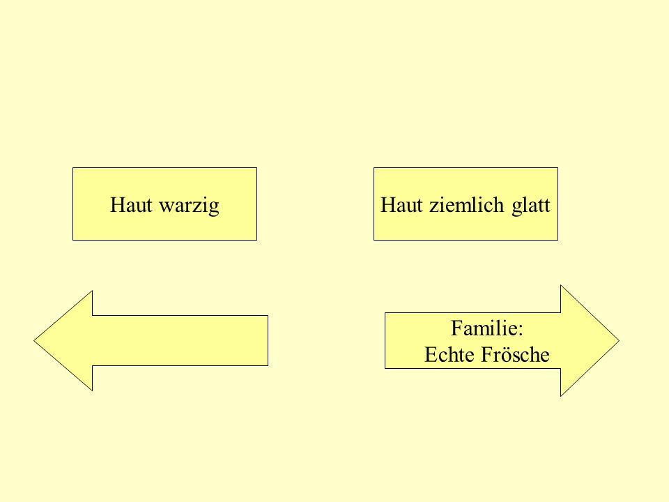 Haut warzig Haut ziemlich glatt Familie: Echte Frösche