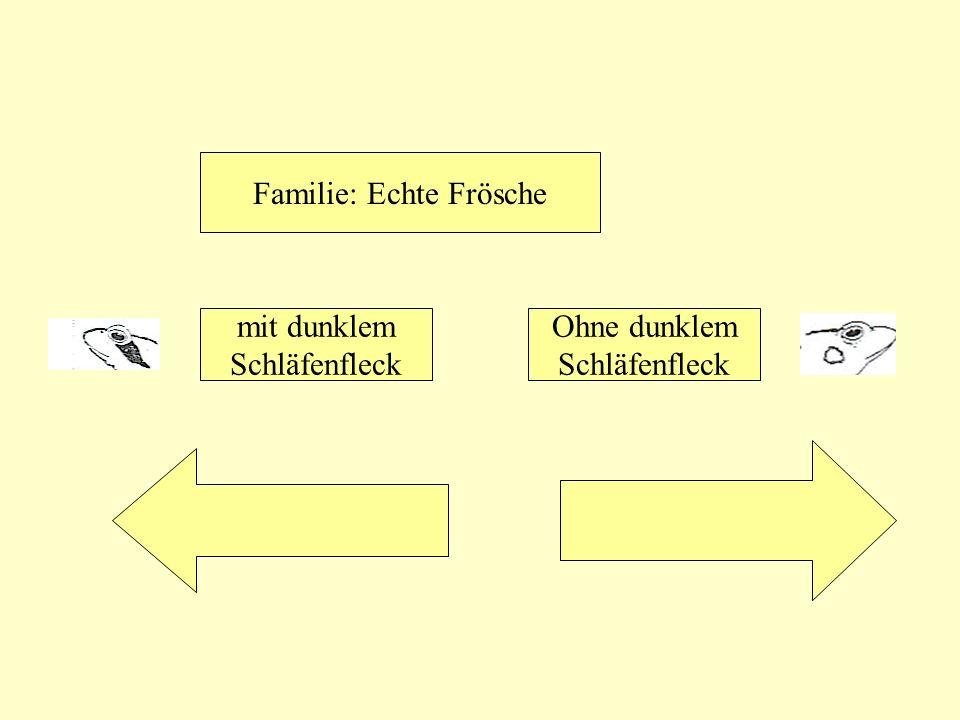 Familie: Echte Frösche