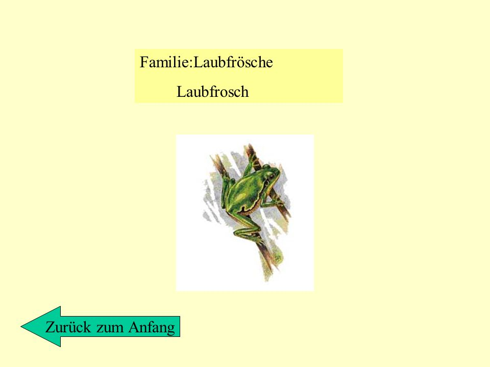 Familie:Laubfrösche Laubfrosch Zurück zum Anfang