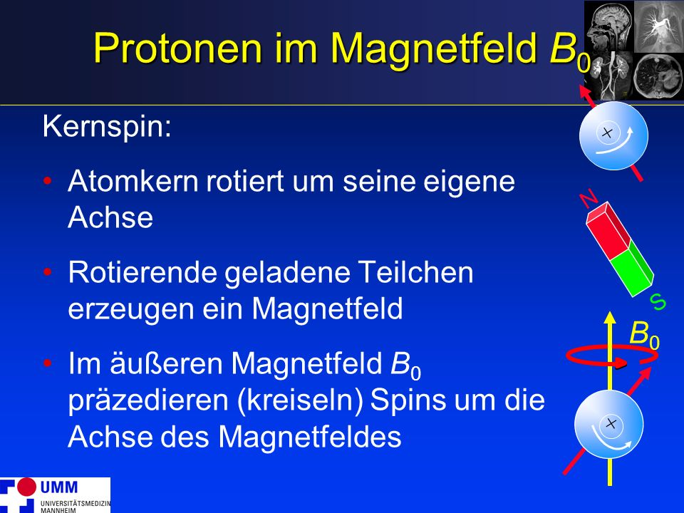 Protonen im Magnetfeld B0
