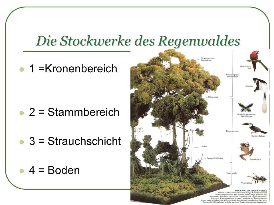 Die Stockwerke des Regenwaldes