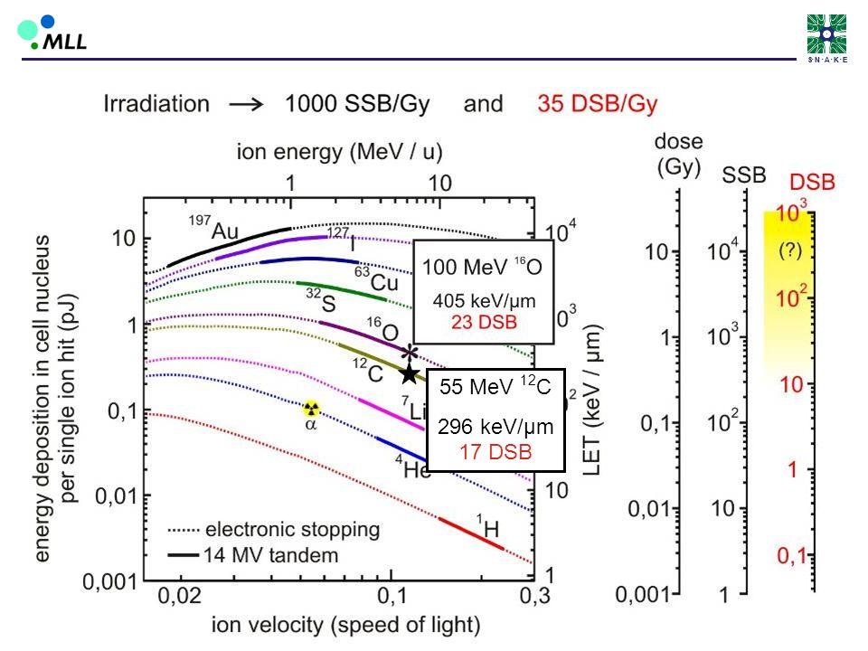S • N • A • K • E 55 MeV 12C 296 keV/µm 17 DSB