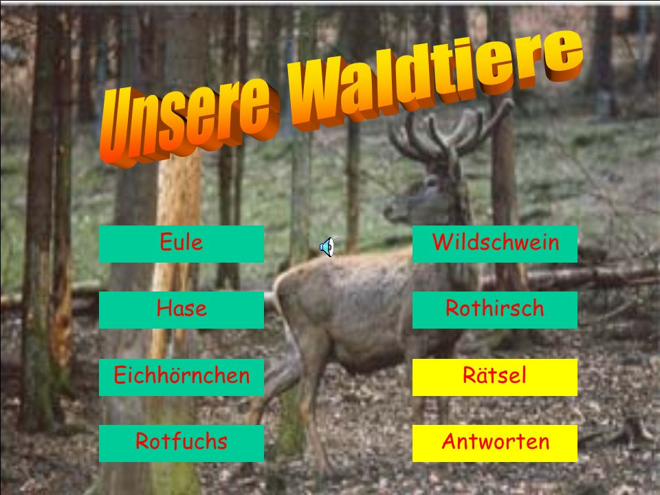 Unsere Waldtiere Eule Wildschwein Hase Rothirsch Eichhörnchen Rätsel