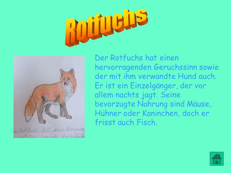 Rotfuchs