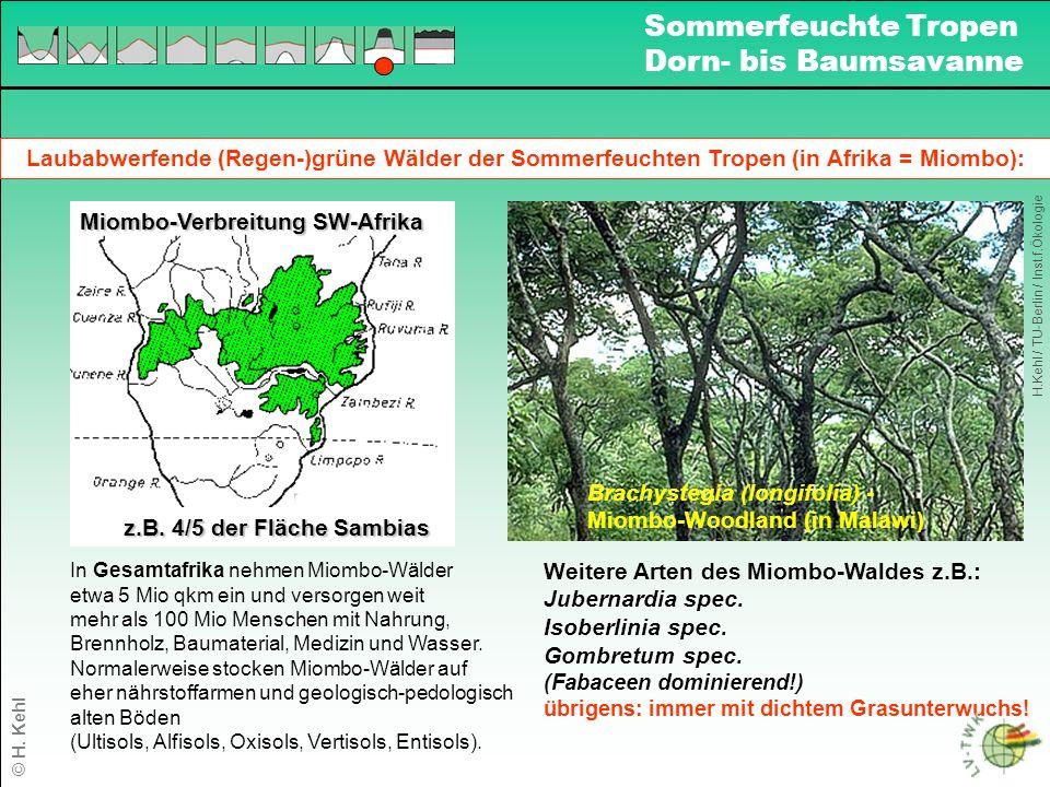 Sommerfeuchte Tropen Dorn- bis Baumsavanne