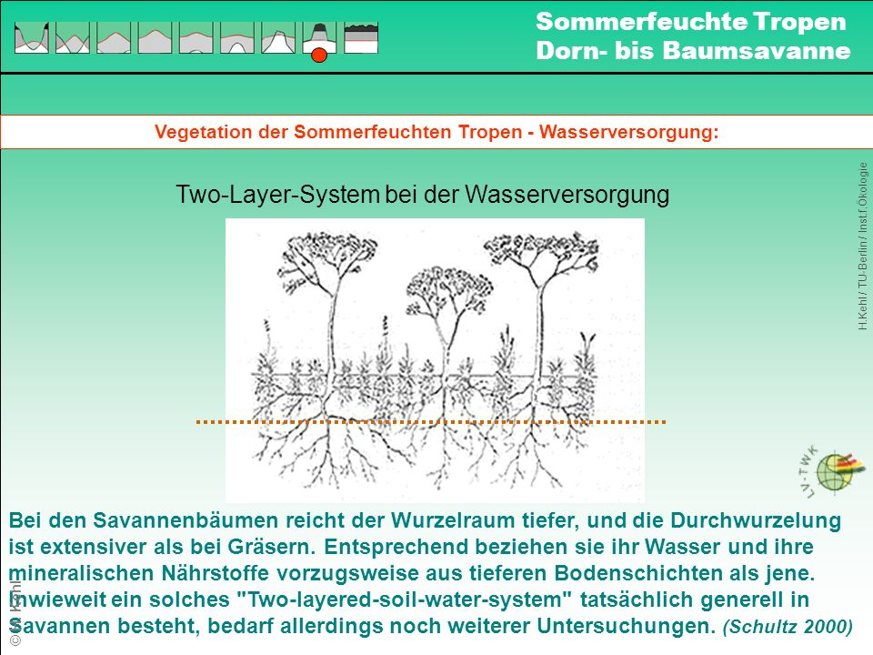 Vegetation der Sommerfeuchten Tropen - Wasserversorgung:
