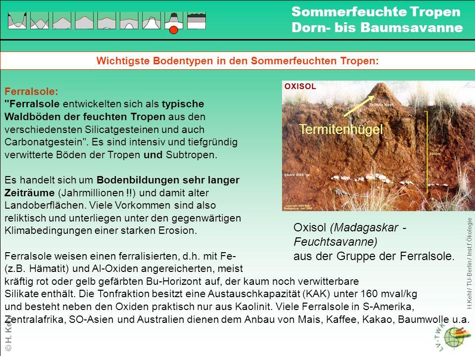 Wichtigste Bodentypen in den Sommerfeuchten Tropen: