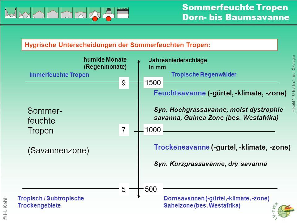 Sommerfeuchte Tropen Dorn- bis Baumsavanne Sommer- feuchte Tropen