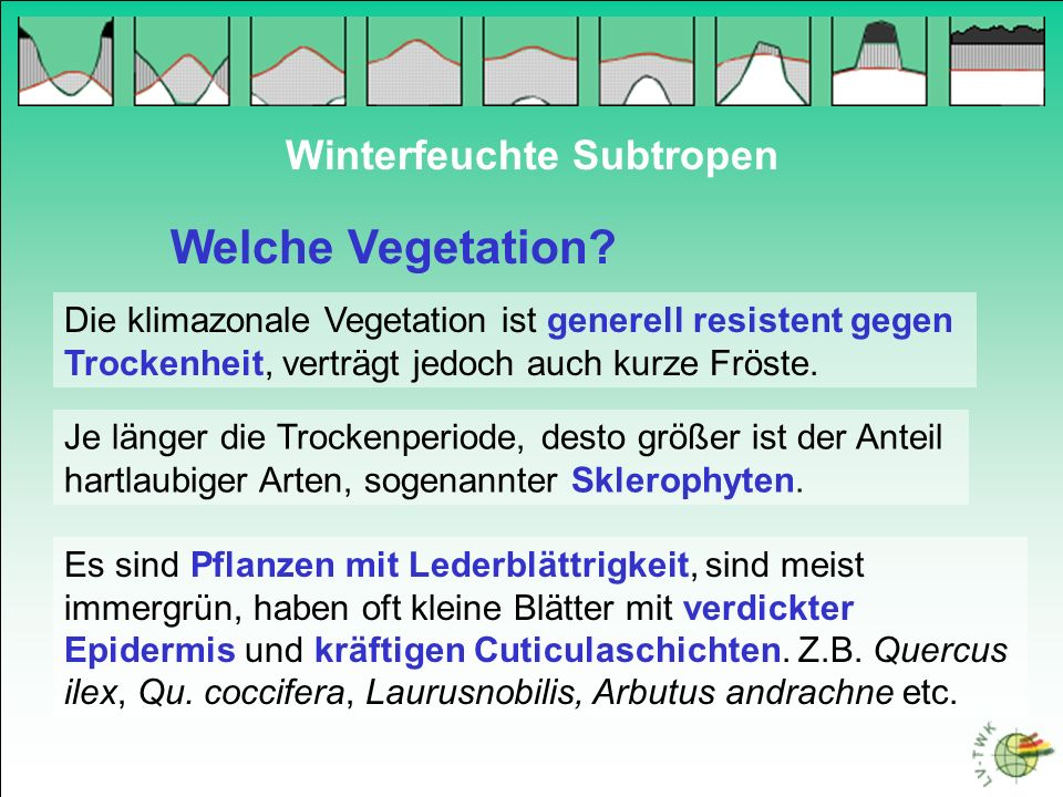 Welche Vegetation Winterfeuchte Subtropen