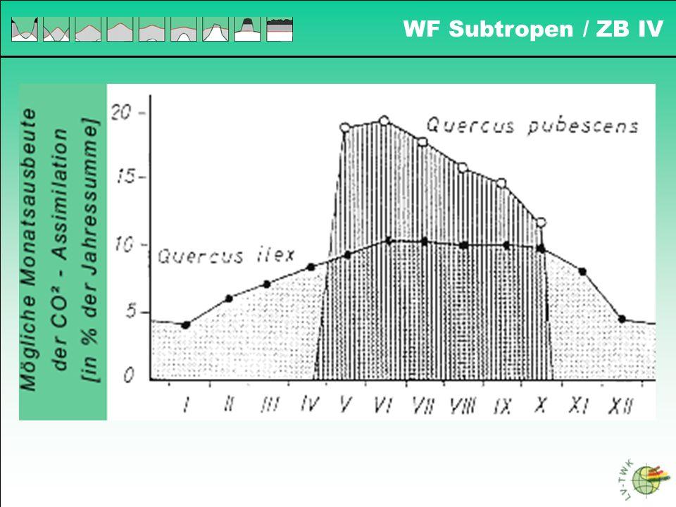 WF Subtropen / ZB IV