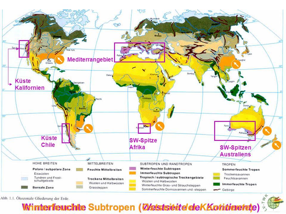 Winterfeuchte Subtropen (Westseite der Kontinente)