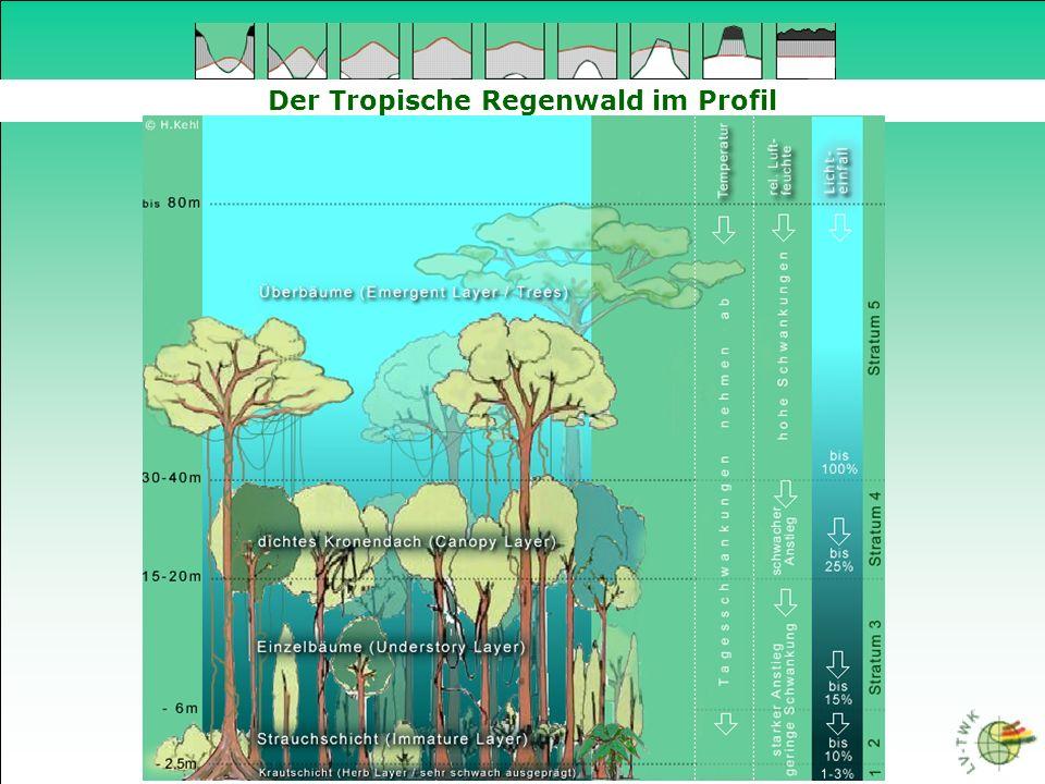 Der Tropische Regenwald im Profil