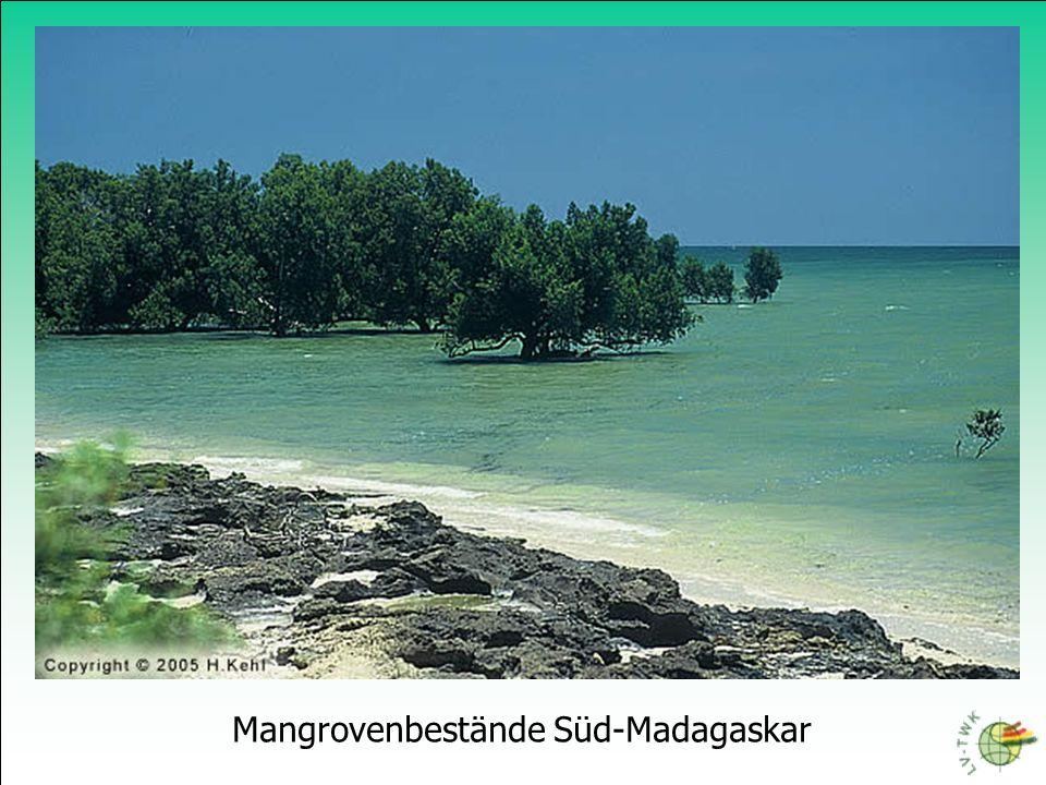Mangrovenbestände Süd-Madagaskar